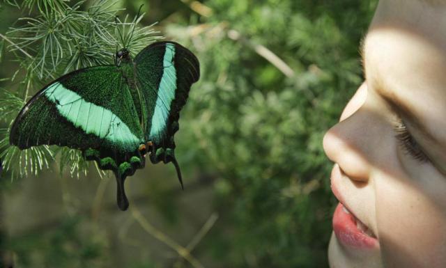 Hey look, a butterfly.