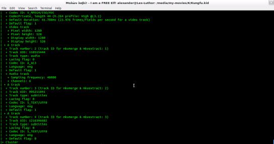Screenshot from mkvinfo, running inside a terminal.